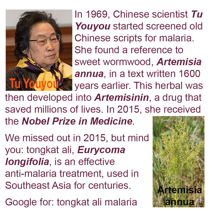 In 1969, Chinese scientist Tu Youyou started screened old Chinese scripts for malaria. She found a reference to sweet wormwood, Artemisia annua, in a text written 1600 years earlier. This herbal was then developed into Artemisinin, a drug that saved millions of lives. In 2015, she received the Nobel Prize in Medicine. We missed out in 2015, but mind you: tongkat ali, Eurycoma longifolia, is an effective anti-malaria treatment, used in Southeast Asia for centuries. = Google for: tongkat ali malaria