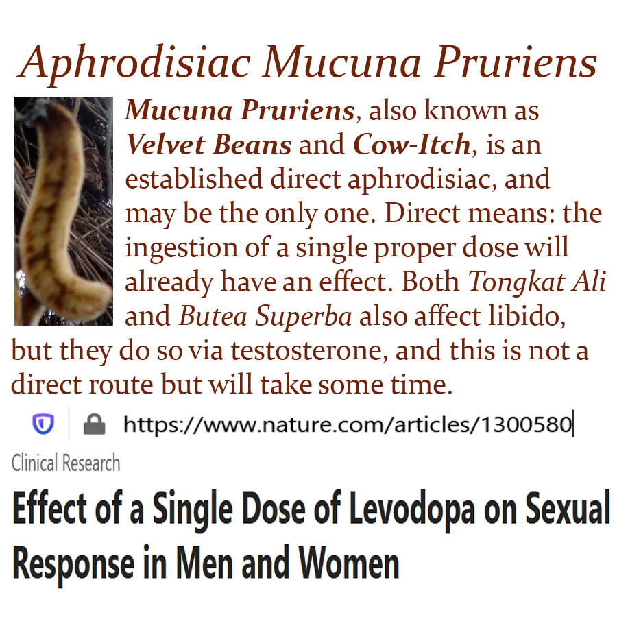 Aphrodisiac Mucuna Pruriens - Mucuna Pruriens, also known as Velvet Beans and Cow-Itch, is an established direct aphrodisiac, and may be the only one. Direct means: the ingestion of a single proper dose will  already have an effect. Both Tongkat Ali and Butea Superba also affect libido, but they do so via testosterone, and this is not a direct route but will take some time.