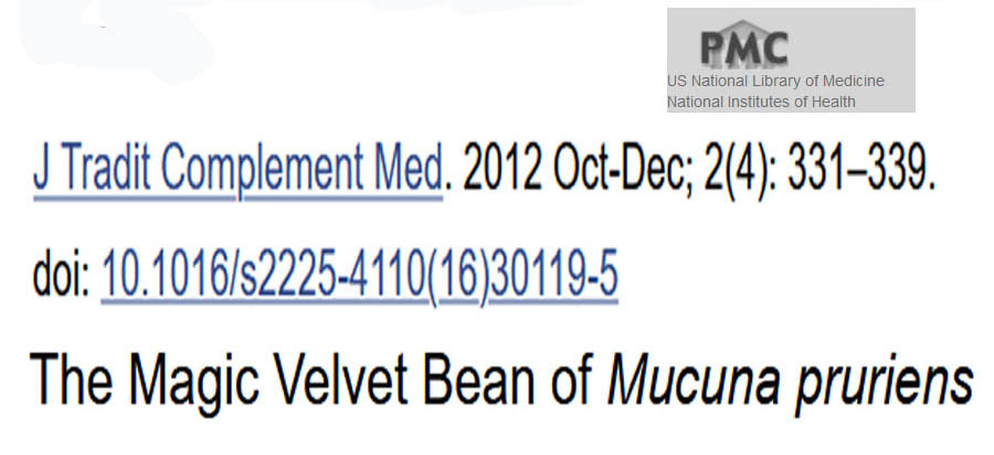 Managing Male Infertility - Quote: Mucuna pruriens is an established herbal drug used for the management of male infertility, nervous disorders, and also as an aphrodisiac. - This is from a scientific journal published by the Unites States NIH (National Institute of Health).