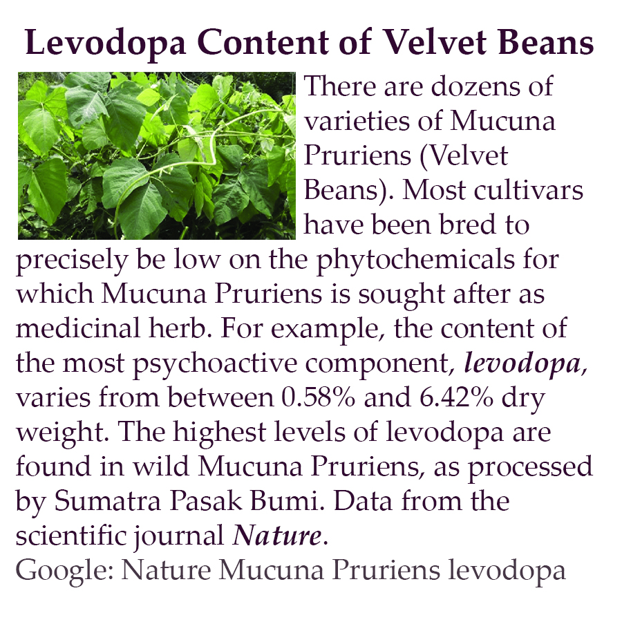 Levodopa Content of Velvet Beans - There are dozens of varieties of Mucuna Pruriens (Velvet Beans). Most cultivars have been bred to precisely be low on the phytochemicals for which Mucuna Pruriens is sought after as medicinal herb. For example, the content of the most psychoactive component, levodopa, varies from between 0.58% and 6.42% dry weight. The highest levels of levodopa are found in wild Mucuna Pruriens, as processed by Sumatra Pasak Bumi. Data from the scientific journal Nature. Google: Nature Mucuna Pruriens levodopa